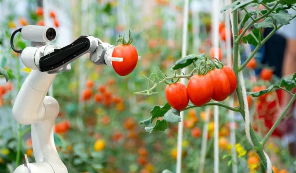 La IA tiene el potencial de promover prácticas agrícolas más productivas