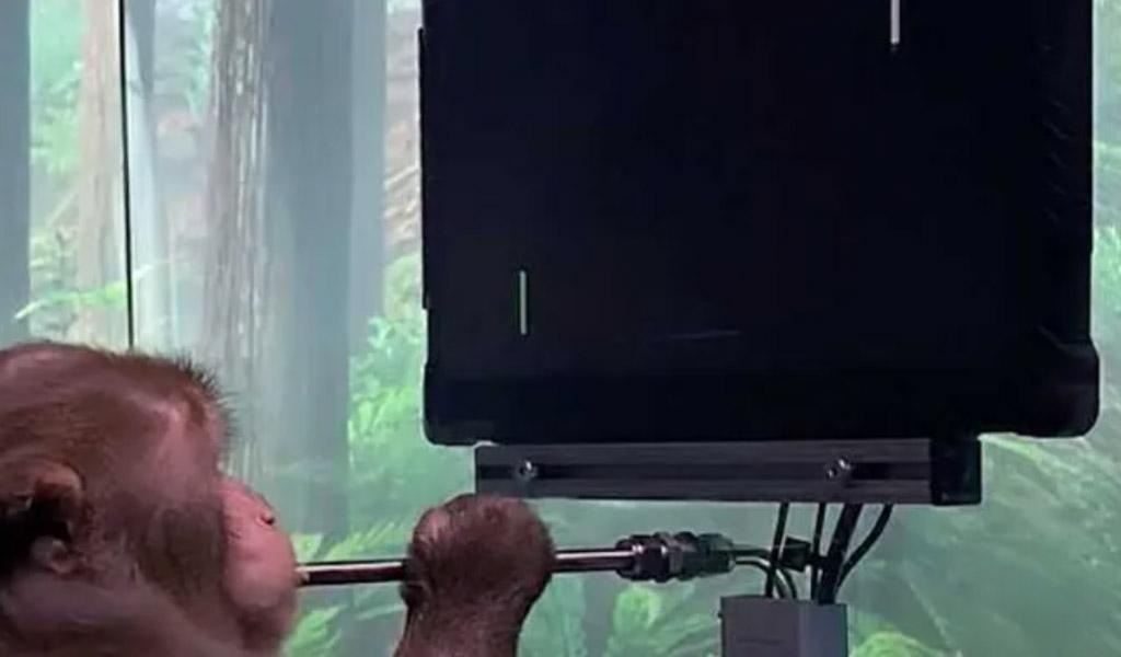 Cómo Neuralink enseñó a un mono a jugar Pong con su mente